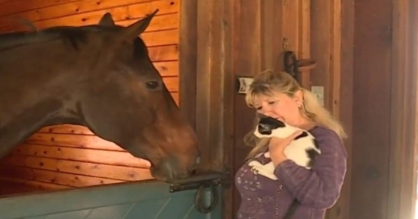 A Horse Donates Blood to Save a Cat's Eye