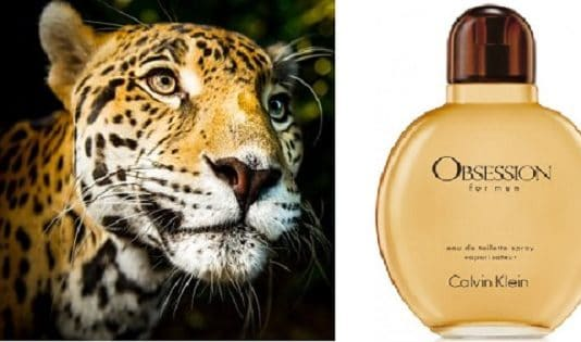 As It Turns Out, Not Only Men Love Kelvin Klein's Obsession – Big Cats Love It Too!