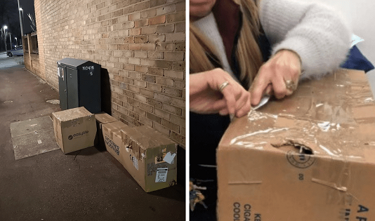 Brave Woman Saves the Life of 11 Cats Left to Die in Boxes by Trash