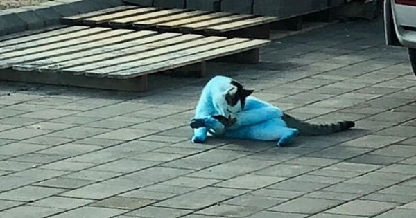 """Cats and dogs were left resembling """"Smurfs"""" after Clacton ink fire"""