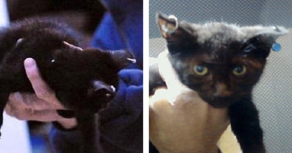 Gothic kittens – Woman charged with animal cruelty for selling pierced cats online