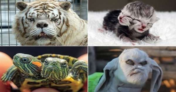 The World's Most Unusual Animals
