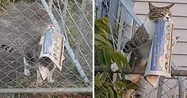 Woman Catches Her Cat Returning From Neighbor's Property With Stolen Goods