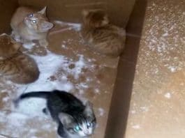Woman Rescues Litter of Kittens From Cardboard Box During Snowstorm