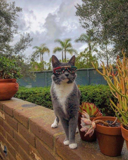 Bagel The Sunglass Cat 2