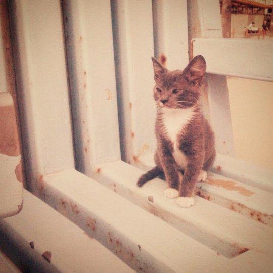 Bagel The Sunglass Cat 3