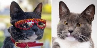 Bagel The Sunglass Cat