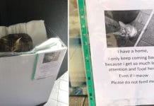 Cat Pretends To Be A Stray So Shoppers Will Give Her Snacks
