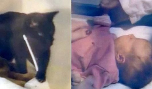 Cat Saves Baby's Life By 'Screeching' Over Baby Monitor