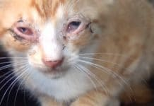 Love and Kindness Is What Turned This Sick Kitty's Life Upside Down