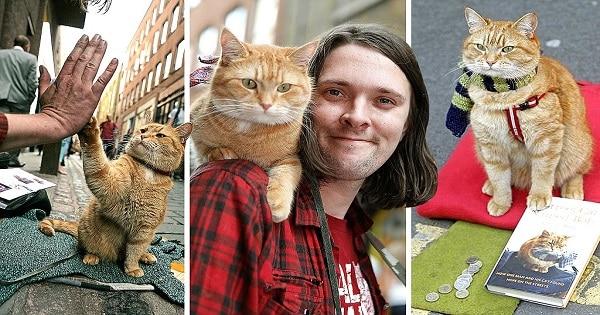 Meet Bob The Street Cat, Who Helped A homeless Man Turn His Life Around