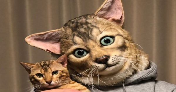 Now You Can Get a Human Size Replica of Your Cat's Face