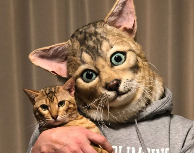 Now You Can Get a Human Size Replica of Your Cat's Face 1