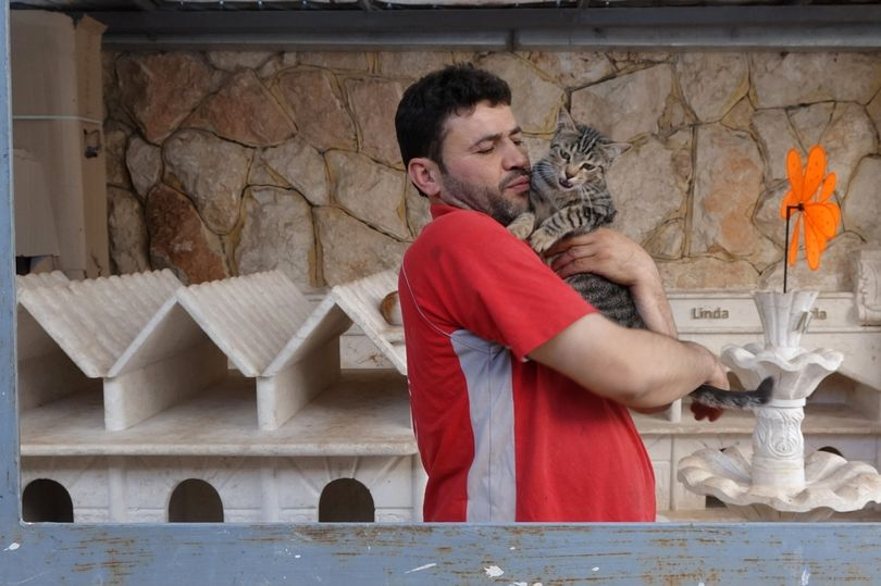 The Cat Man of Aleppo Returns to Syria to Look After the Animals 1