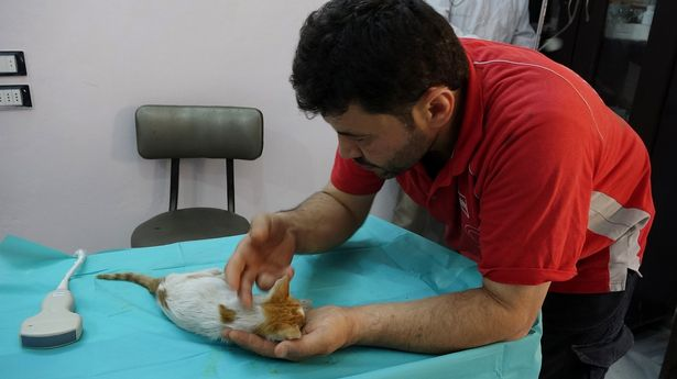 The Cat Man of Aleppo Returns to Syria to Look After the Animals 2