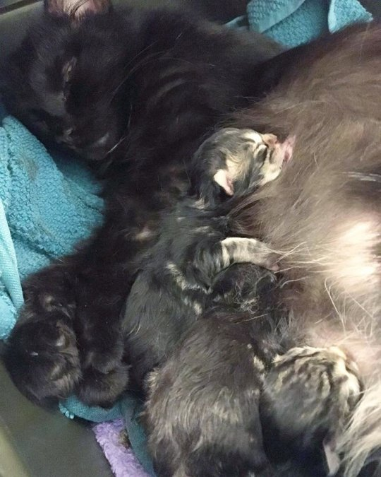 Pregnant stray cat goes to the same house every day to get someone to take her future kittens in 3