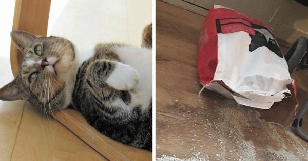 Cat Splits Open A Litter Bag To Poop After He Finds Door To His Litter Box Shut