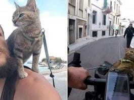 Cat travels the world on a bicycle after backpacker adopts the stray kitten