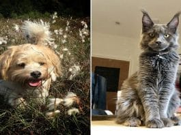 Computer judges PET photo competition - here's the cats and dogs it thinks are cutest