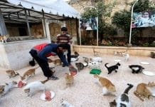 The Cat Man of Aleppo Returns to Syria to Look After the Animals