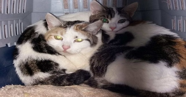 This Mama Cat and Kitten Were Left With Potato Chips On A Woman's Doorstep