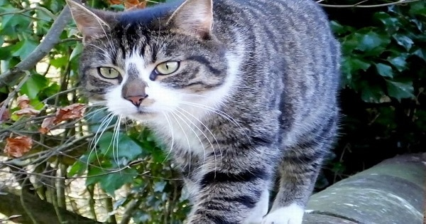 Thugs Catch Cat and Burn Its Tail and Ears with a Cigarette!