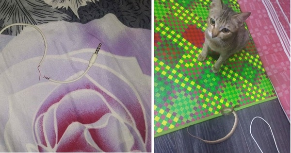 Cat Brings Snake as Replacement for the Earphone Cable she Chewed Through!