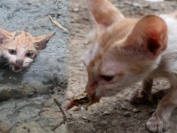 Kitten Was Stuck in the Mud Before a Good Man Saved its Life