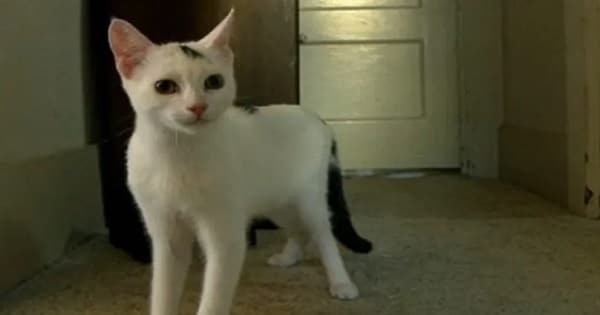 Abandoned Disabled Kitten Learns How To Walk