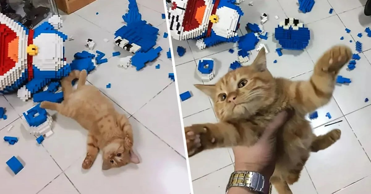 Man Spends Weeks on Toy Model – Cat Doesn't Care