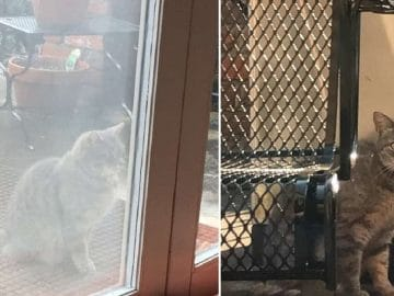 Neighbor's Cat Visits Window Every Day Looking For Friend Who Passed Away