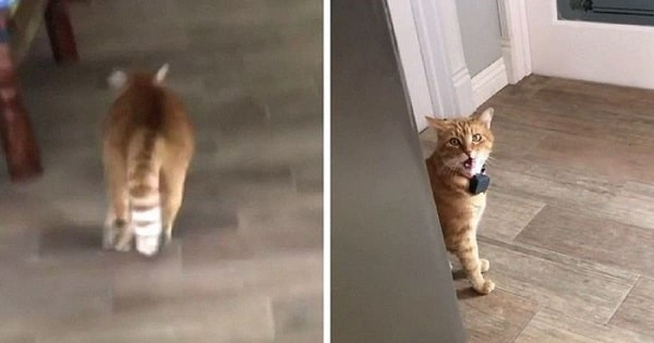 """People Can't Get Enough Of Cat Saying """"Well, Hi"""" Like A Gentleman"""