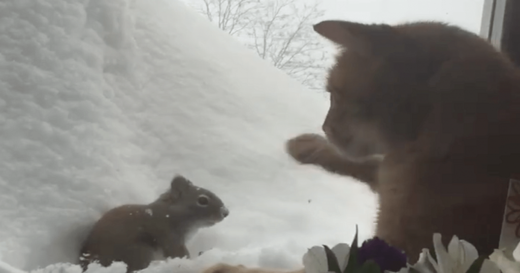 Video Clip Of Cat Engaging Squirrel In An Epic Staring Contest