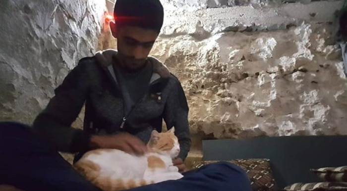A Syrian Town Has More Cats Than People 1