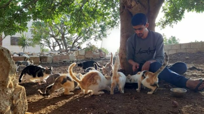 A Syrian Town Has More Cats Than People 2