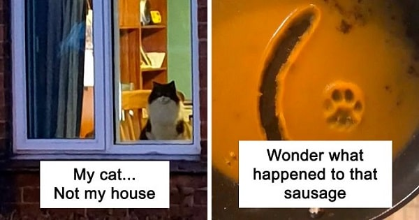 Cat Snapchats That Will Make Your Day