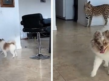 Watch the Cutest & Funniest Pet Friendship Video You'll See Today