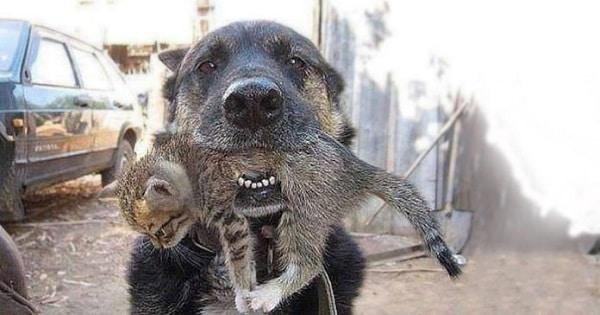 A Dog Runs Through Flames to Save His Kitten Buddy