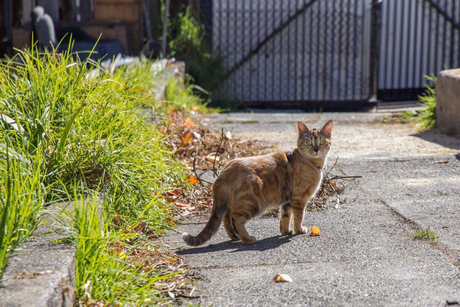 Cat Deterrent 1