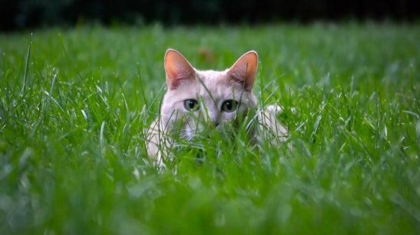 Cat Deterrent 2