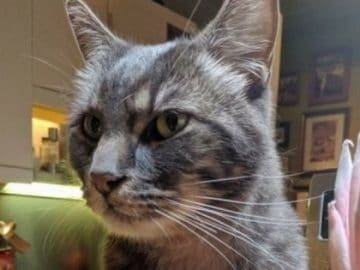 Cat Missing for Over a Year Turns Up Thousands of Miles Away