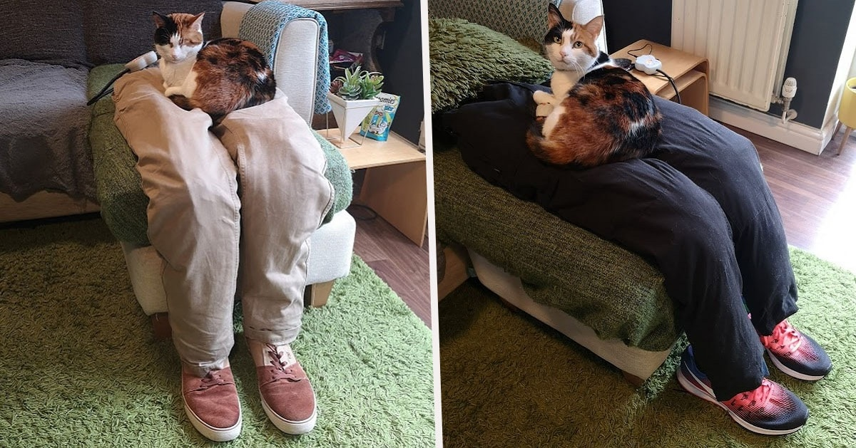Couple Finds an Ingenious Way to Fool their Super-Clingy Cat