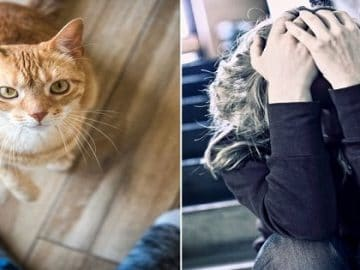 Crazy Cat Traps Her Owner in the Kitchen for 2 Days