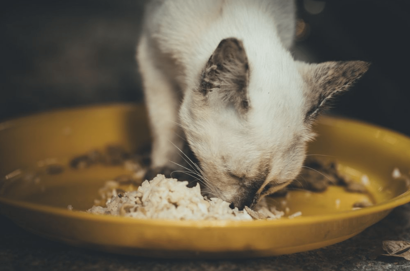 How Long Can a Cat Go Without Food 2
