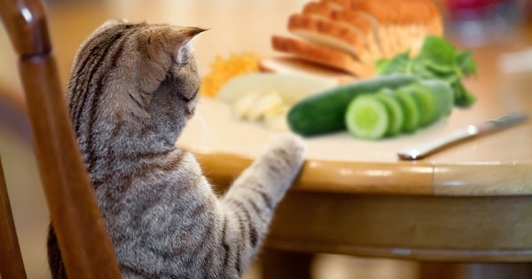 How Long Can a Cat Go Without Food?