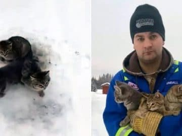 Man Rescues Frozen Kittens with Hot Coffee