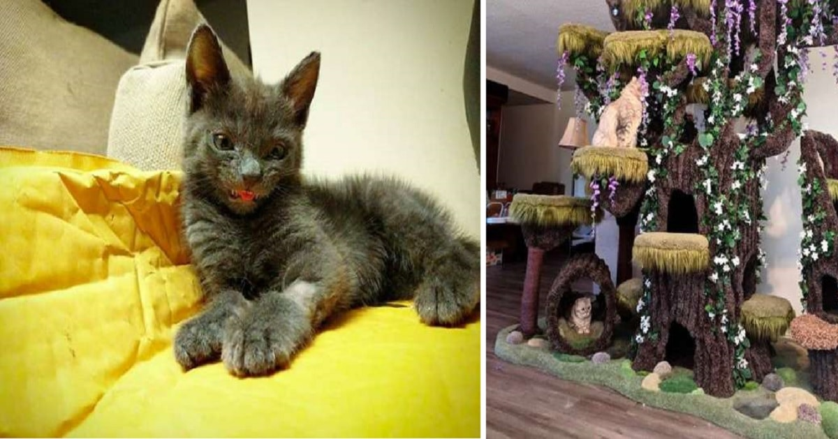 Mom Buys Her Special Needs Cat a Special Cat Tree
