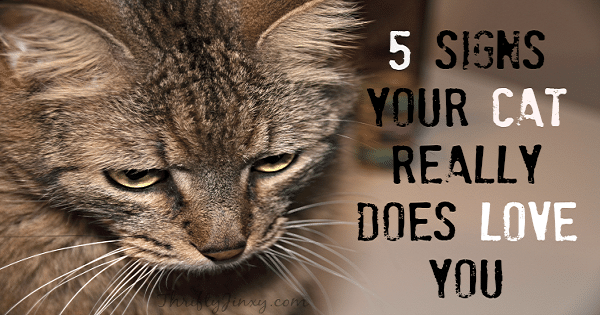 Signs That Indicate Your Cat Loves You