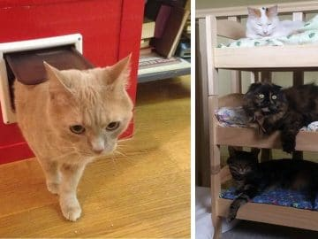 Your Kitty Cats Will Love These Simple IKEA Hacks