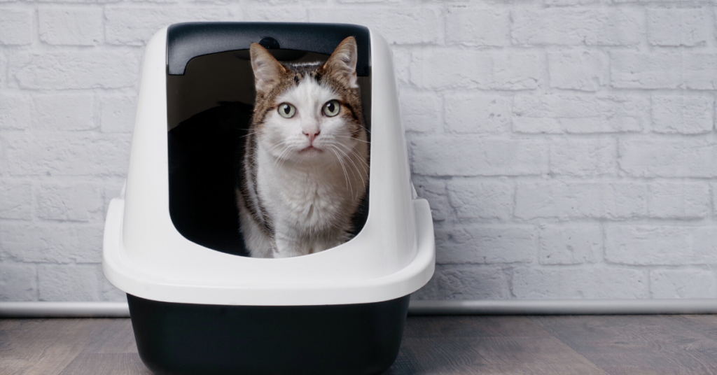Cat Litter Review and Buying Guide 2020